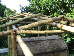 framing Bokashi compost plant with bamboo