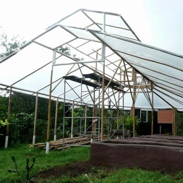 bamboo greenhouse bambu invernadero